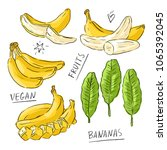 set illustration with bananas... | Shutterstock .eps vector #1065392045