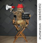Small photo of The cat director in a red hat with a megaphone and a clapperboard sits on the chair.