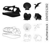 prehistoric shell  dinosaur... | Shutterstock .eps vector #1065521282