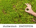 Small photo of positive feelings about nature topics