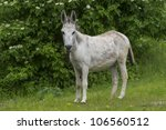 """Close to a donkey """"Asinus"""" in Bavaria - stock photo"""