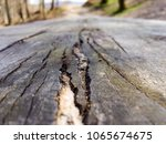 wooden table in the forest   Shutterstock . vector #1065674675