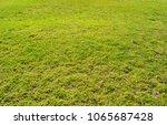 cutted green grass | Shutterstock . vector #1065687428