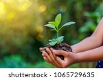 Earth Day In the hands of trees growing seedlings. Bokeh green Background Female hand holding tree on nature field grass Forest conservation concept