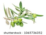 close up of green twig olive... | Shutterstock . vector #1065736352