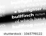bullfinch word in a dictionary. ... | Shutterstock . vector #1065798122