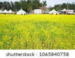 korea rapeseed flower | Shutterstock . vector #1065840758