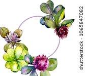 wildflower clover. floral... | Shutterstock . vector #1065847082