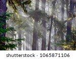 tongass national forest ... | Shutterstock . vector #1065871106