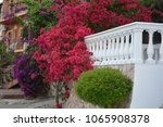 ornamental flowers bright red... | Shutterstock . vector #1065908378
