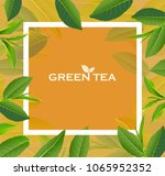 green tea leaves manu and... | Shutterstock .eps vector #1065952352