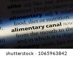Small photo of alimentary canal word in a dictionary. alimentary canal concept.