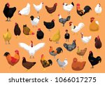 Various Chicken Breeds Poultry...