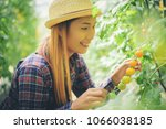 woman in kitchen garden picking ... | Shutterstock . vector #1066038185