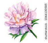 watercolor illustration ... | Shutterstock . vector #1066130585
