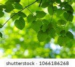 summer branch with fresh green... | Shutterstock . vector #1066186268