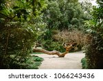 beautiful landscape with wood | Shutterstock . vector #1066243436