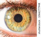green eye macro | Shutterstock . vector #1066277948