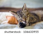 Stock photo small cat 106633955