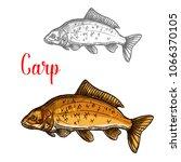carp freshwater fish isolated... | Shutterstock .eps vector #1066370105