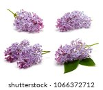 lilac set isolated on white... | Shutterstock . vector #1066372712