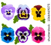 Pansy. Set Of Spring Flowers....