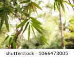 summer effect leaves in bali | Shutterstock . vector #1066473005