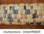 fresh corn multi color close up | Shutterstock . vector #1066498805