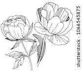 wildflower peony flower in a... | Shutterstock .eps vector #1066545875
