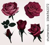 deep red realistic roses vector ... | Shutterstock .eps vector #1066562372
