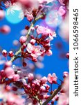 spring cherry bloom | Shutterstock . vector #1066598465