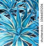 agave plant leaves   Shutterstock . vector #1066605206