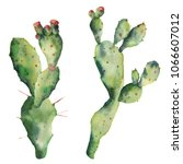 watercolor cactuses with...   Shutterstock . vector #1066607012