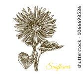 sunflower. sketch. engraving... | Shutterstock .eps vector #1066698536