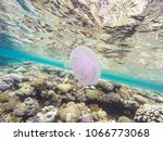 observation of jellyfish during ... | Shutterstock . vector #1066773068