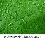Green Leaf With Water Drop...