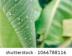 water drop on green leaf in the ... | Shutterstock . vector #1066788116