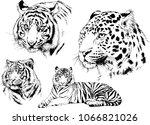 vector drawings sketches... | Shutterstock .eps vector #1066821026
