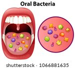 an image showing oral bacteria... | Shutterstock .eps vector #1066881635