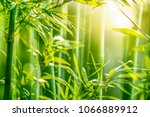 bamboo forest in the morning | Shutterstock . vector #1066889912