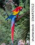 macaw parrot on a branch... | Shutterstock . vector #1066925312