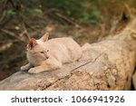 cute cat playing on wood | Shutterstock . vector #1066941926