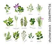 clip art illustrations of herbs ... | Shutterstock .eps vector #1066994756