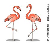pink flamingo bird pop art... | Shutterstock .eps vector #1067032688