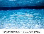 against the stream wildlife... | Shutterstock . vector #1067041982