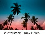 silhouette of coconut palm... | Shutterstock . vector #1067124062