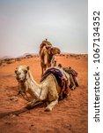 Caravan Camels Trekking Throug...