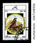 Small photo of MOSCOW, RUSSIA - MARCH 18, 2018: A stamp printed in Afghanistan shows Chukar Partridge (Alectoris chukar), Birds serie, circa 1985