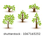 beautiful tree vector  on a... | Shutterstock .eps vector #1067165252