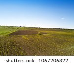 view on the field with yellow... | Shutterstock . vector #1067206322